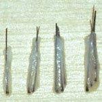 Unités folliculaire pour implants capillaires